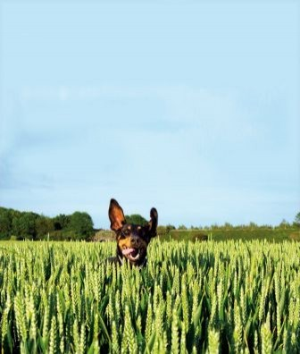 durch zecken übertragene krankheiten hund