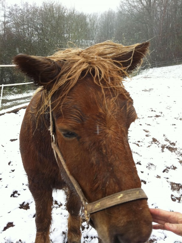 pferd cushing diagnose