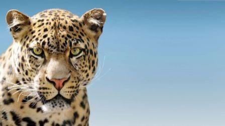 Ein Leopard zum Frhstck  hundkatzepferd