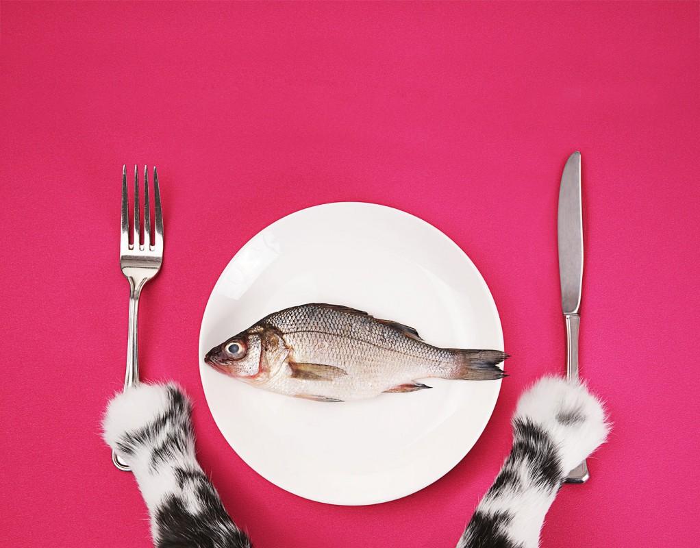 was ist die richtige diät