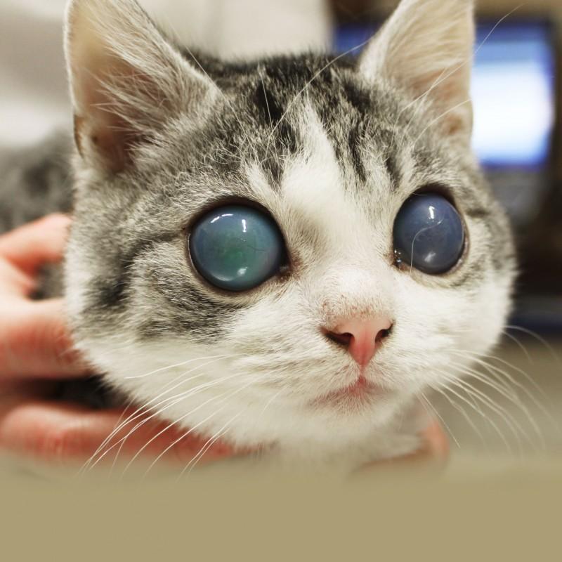 Wunderbar Katzen Augen Anatomie Fotos - Menschliche Anatomie Bilder ...