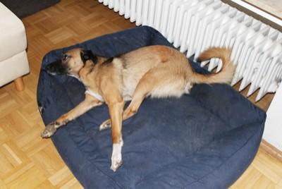 Epilepsie Bei Hund Und Katze Hundkatzepferd