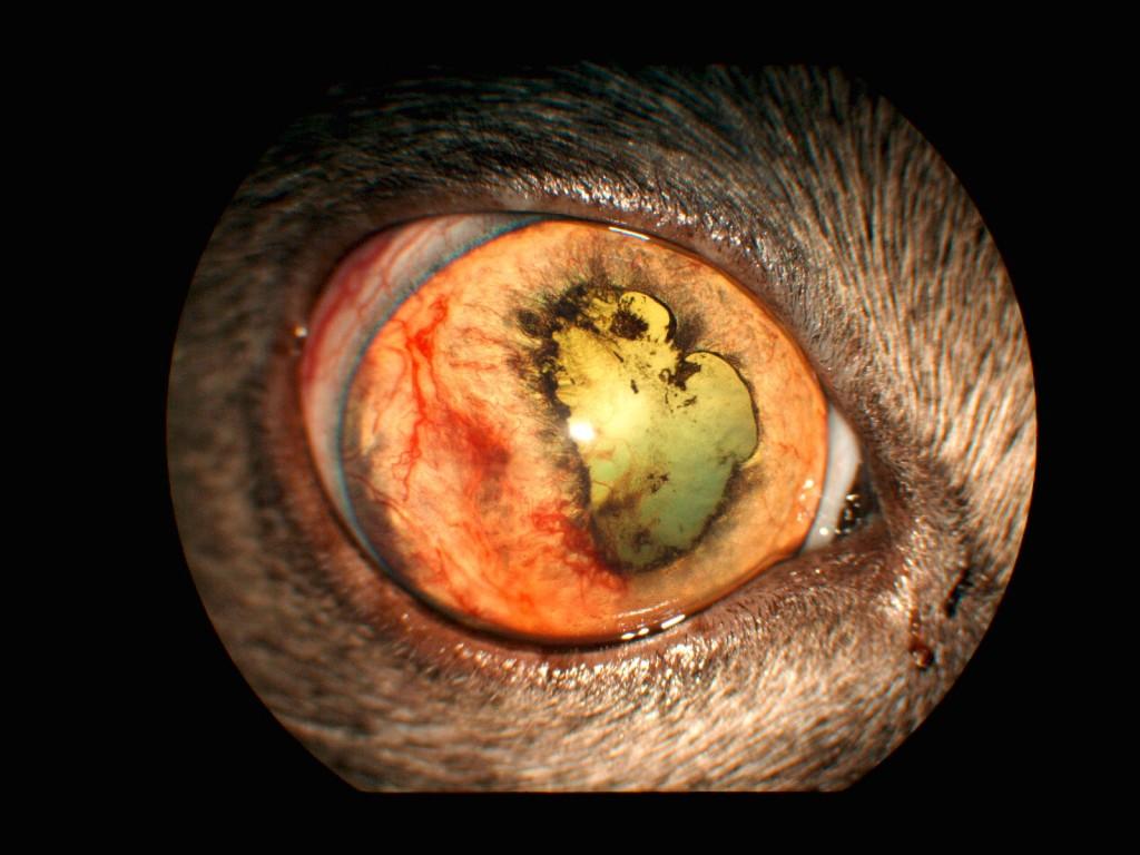 führt ein glaukom immer zur erblindung