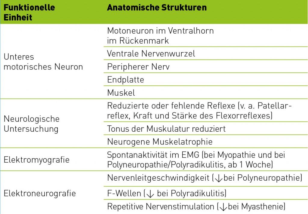 Erkrankungen des peripheren Nervensystems und der Muskulatur ...