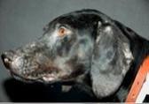 Leishmaniose Beim Hund Hundkatzepferd