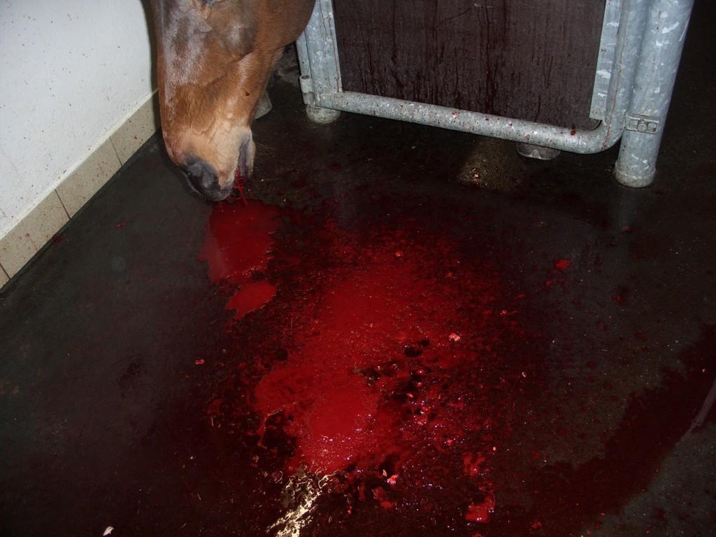 blutender tumor beim hund